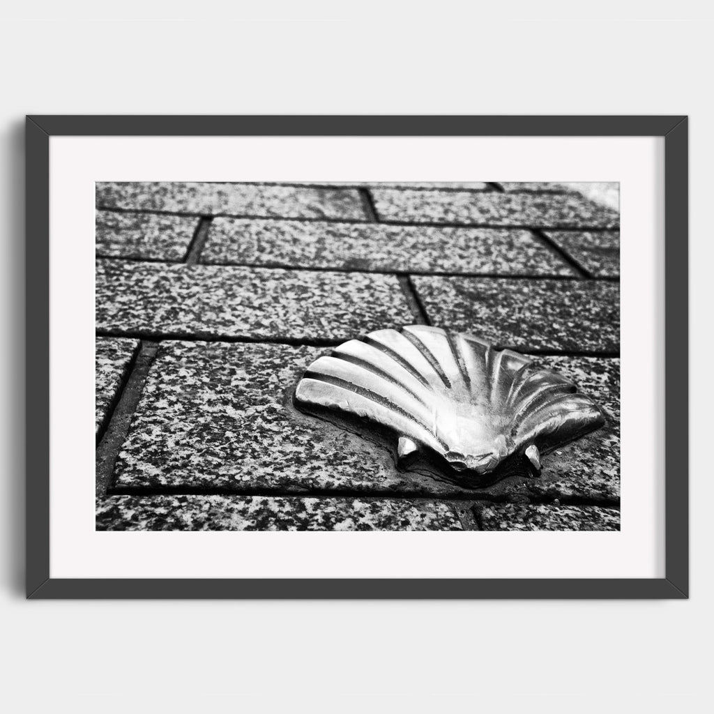 Bronze Scallop Shell  - Fine Art Print