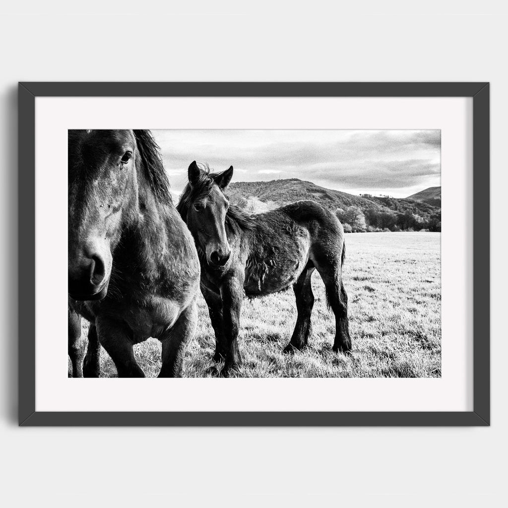 Horses of the Pyrenees - Fine Art Print