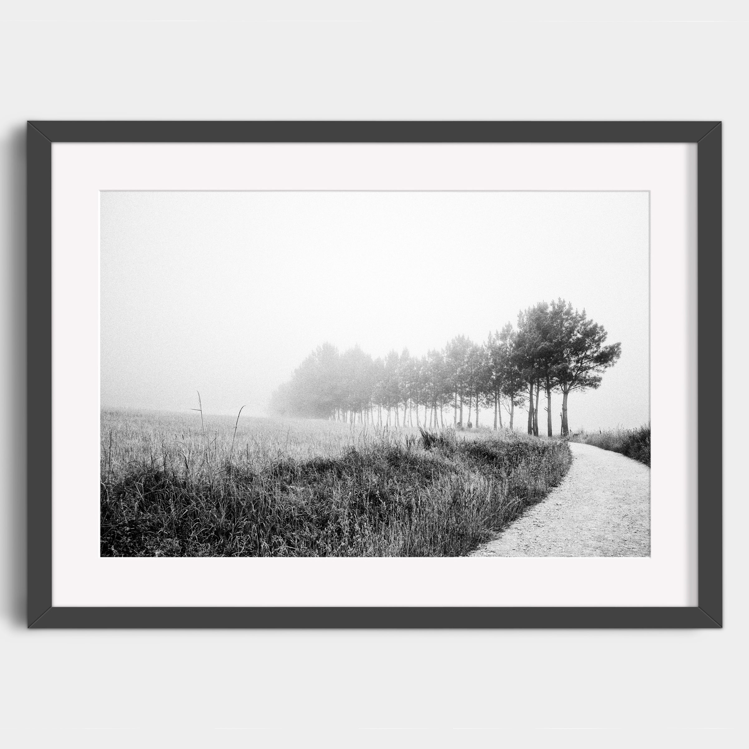Leaving the Forests of Portomarin - Fine Art Print