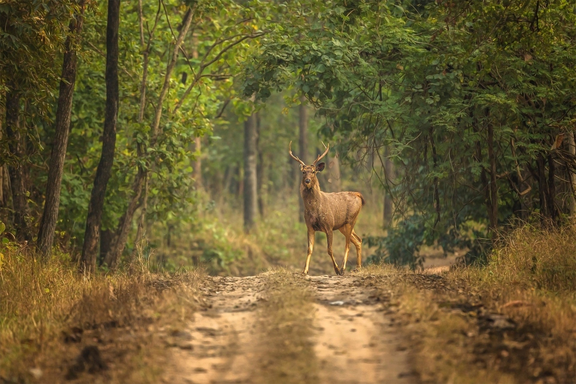 pench-deer-free-images