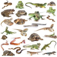 Other Reptile Friends