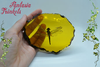 Dragonfly in Amber Replica - Real Insect in Resin - Outlander Paperweight