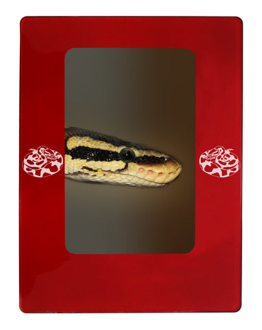 "Red Ball Python 4"" x 6"" Magnetic Photo Frame (Vertical/Portrait)"