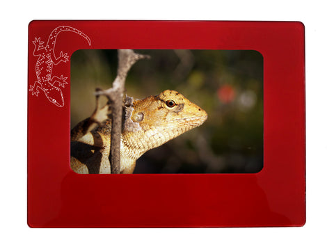 "Red Gecko 4"" x 6"" Magnetic Photo Frame (Horizontal/Landscape)"