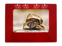 "Red Hermit Crab 4"" x 6"" Magnetic Photo Frame (Horizontal/Landscape)"
