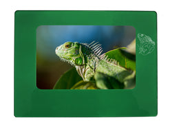"Green Iguana 4"" x 6"" Magnetic Photo Frame (Horizontal/Landscape)"