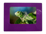 "Purple Iguana 4"" x 6"" Magnetic Photo Frame (Horizontal/Landscape)"