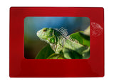 "Red Iguana 4"" x 6"" Magnetic Photo Frame (Horizontal/Landscape)"