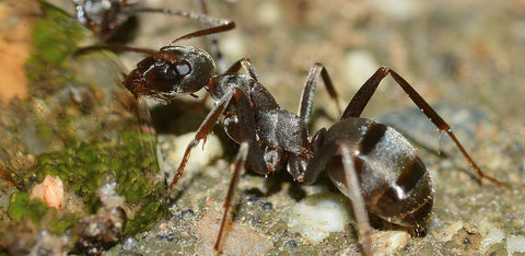 ants for survival