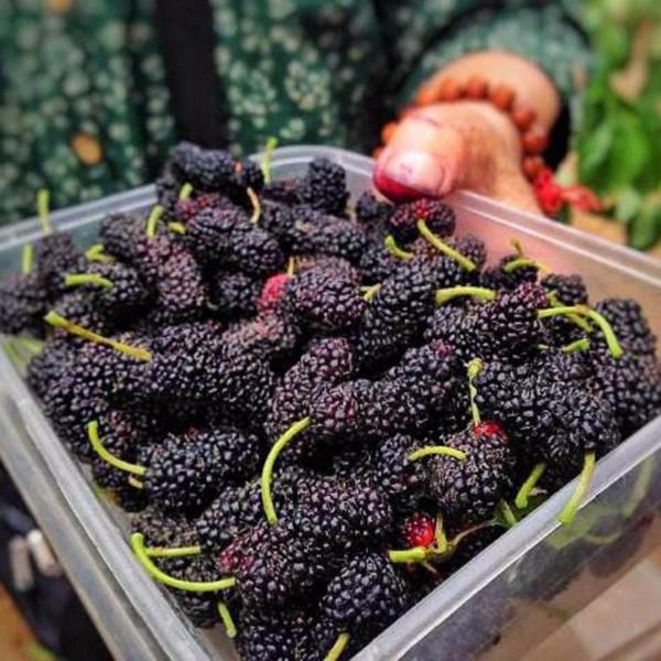 10 Ways To Style Your Very Own Vegetable Garden: Jumbo Thornless Blackberry Seeds