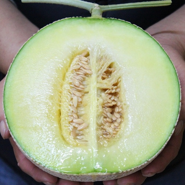 Organic Muskmelon Fruit Seeds