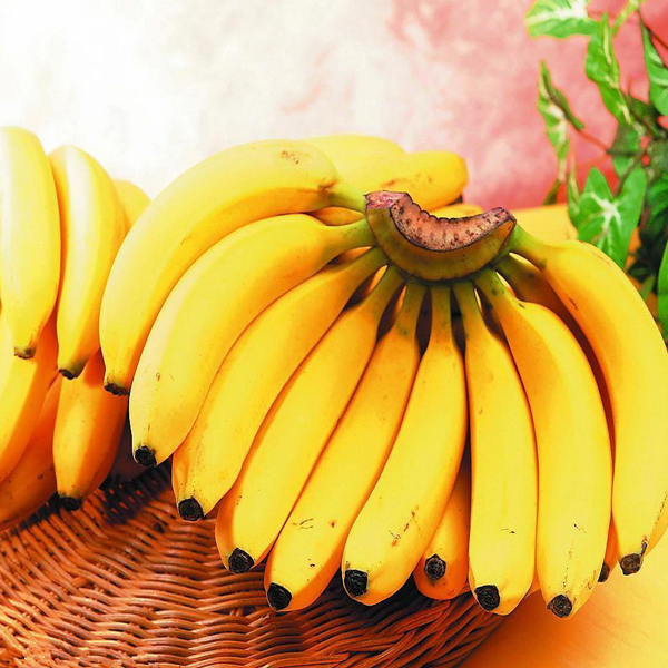 Cavendish Bananas Fruit Seeds