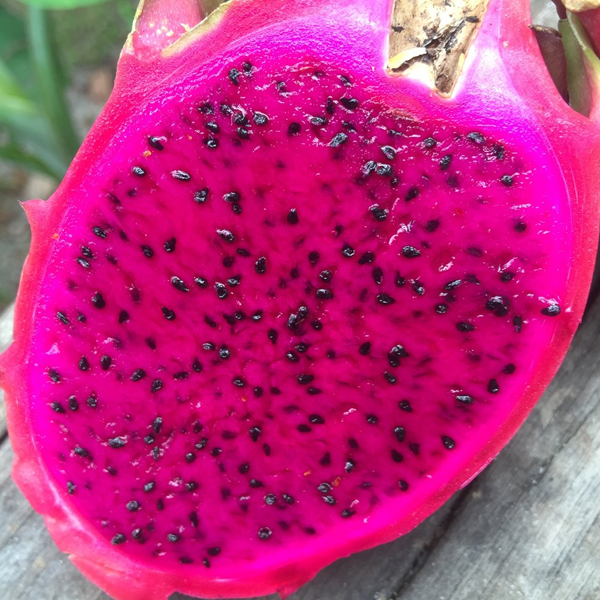 Pink Pitaya Fruit Seeds