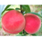 Small Potted Tree Flat Peach Seeds
