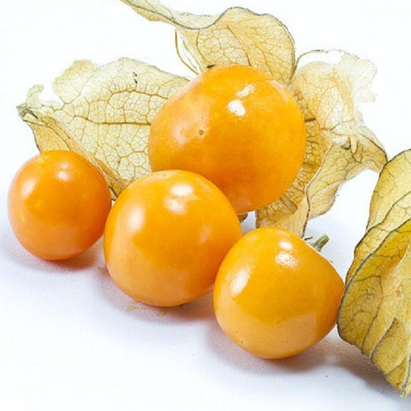 Golden Berry Seeds