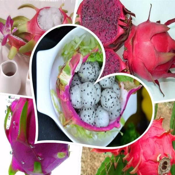 Red Cover White Pitaya Seeds