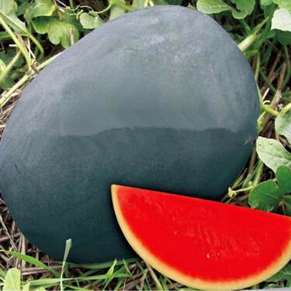 Sweet Giant Black Skin Watermelon Seeds Jack Seeds