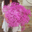 Sweet Pink Gypsophila Flower Seeds