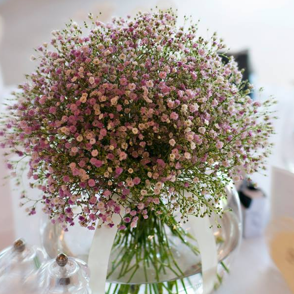 Purple white mix gypsophila flower seeds jack seeds purple white mix gypsophila flower seeds mightylinksfo