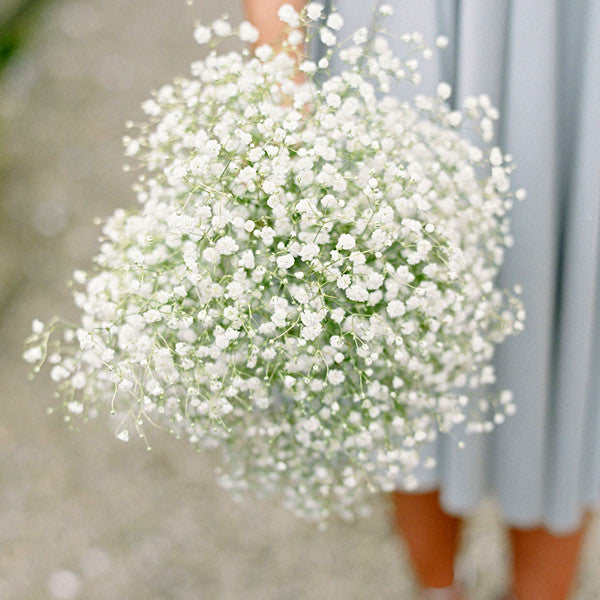 White Gypsophila Flower Seeds