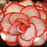 White-Red Begonia Flower Seeds