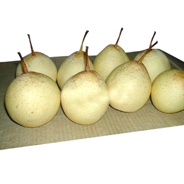 Chinese White Sand Pear Seeds