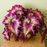 Pink Green Coleus Flower Seeds