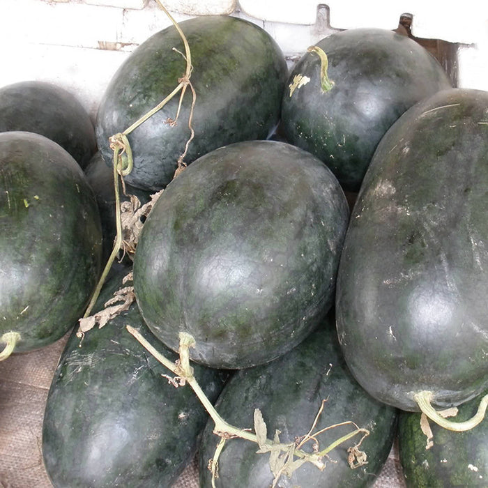 Black Tyrant King Super Sweet Watermelon Seeds