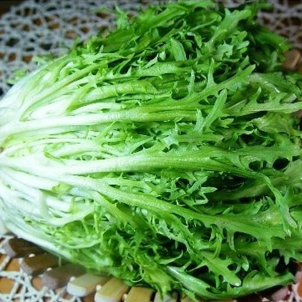 Green Thin Endive and Escarole Vegetable Seeds