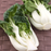 Pak Choi Chinese Cabbage Vegetable Seeds