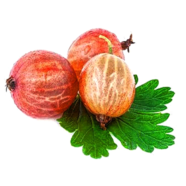 Red Pan-American Gooseberry Seeds