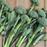 Sweet Baby Broccoli Vegetables Seeds