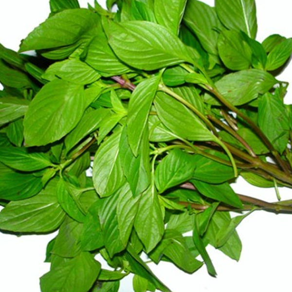 Thai Basil Siam Queen Ornamental Plant Seeds