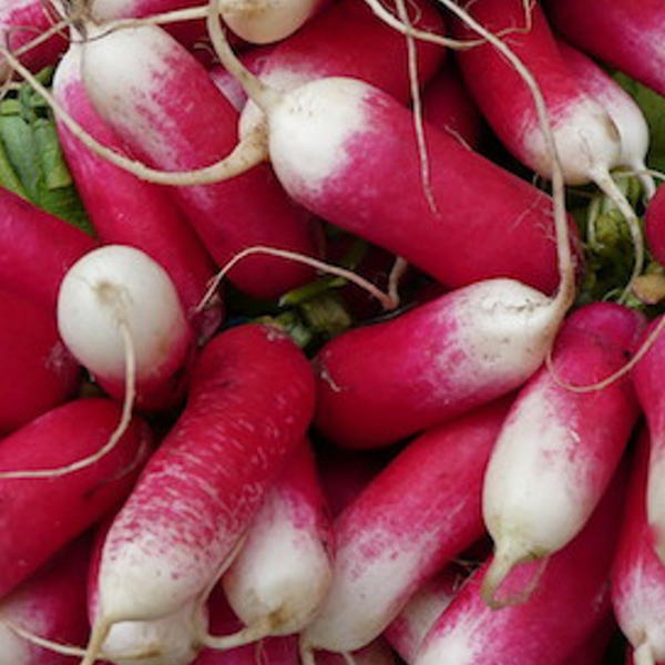French Radish Vegetable Seeds