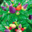 Colorful Ornamental Hot Pepper Seeds