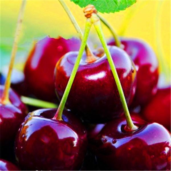 Dwarf Cherry Tree Seeds