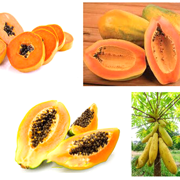 Yellow Gold Papaya Heirloom Seeds