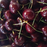 Dwarf Cherry Tree Fruit Seeds