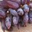 Advanced Finger Grape Fruit Seeds