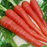 Dark Red Carrot Vegetable Seeds