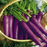 Cosmic Purple Vegetable Carrot Seeds
