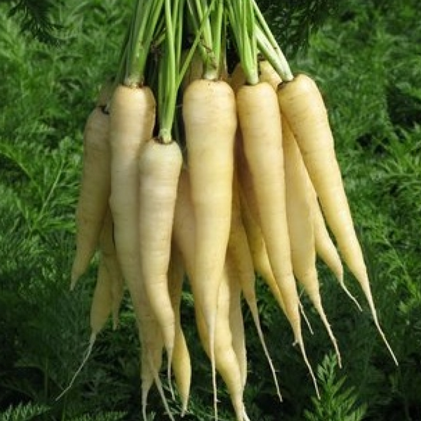 White Carrot Vegetable Seeds