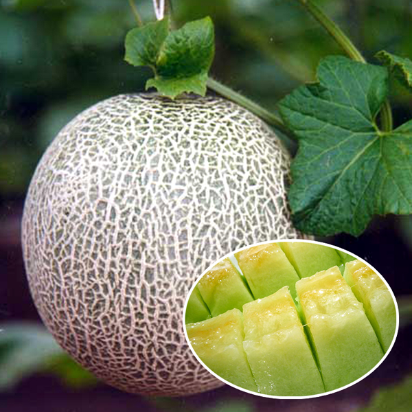 10 Ways To Style Your Very Own Vegetable Garden: Cantaloupe Melon Vegetable Fruit Seeds