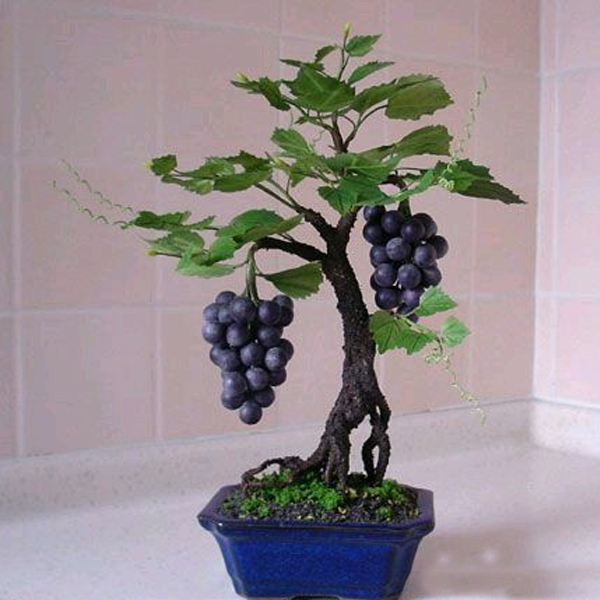 Miniature Grape Vine Seeds