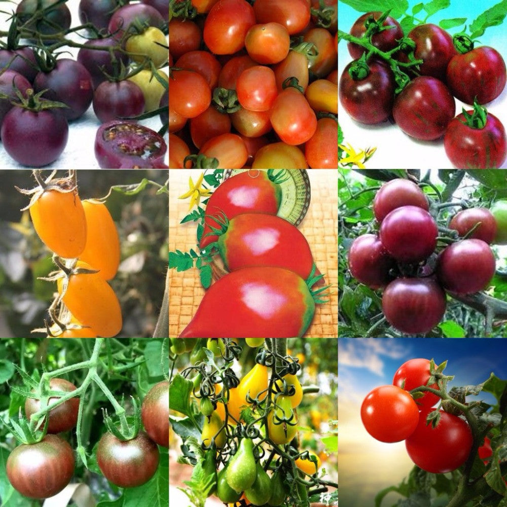 10 Ways To Style Your Very Own Vegetable Garden: Colorful Cherry Tomatoes Vegetable Seeds