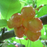 Sweet Sylvia Upright Cherry Seeds