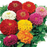 Magellan Mix Flower Seeds