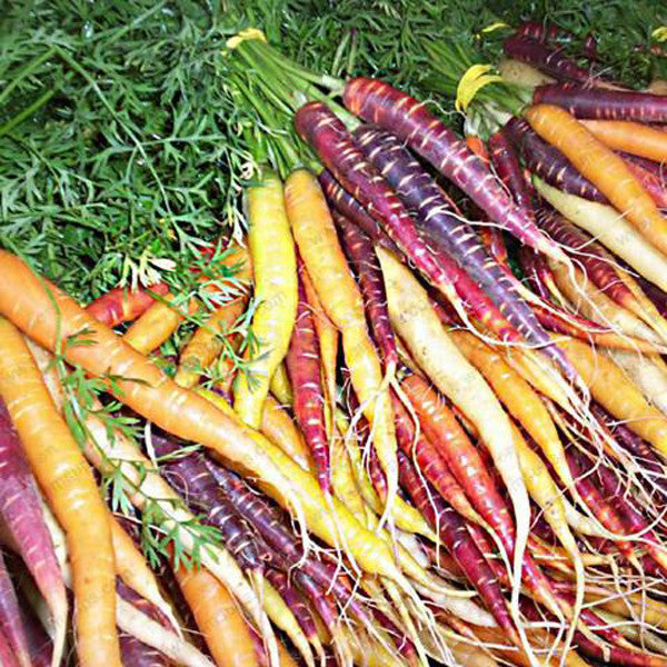 Black/Purple Carrot (50 Seeds)