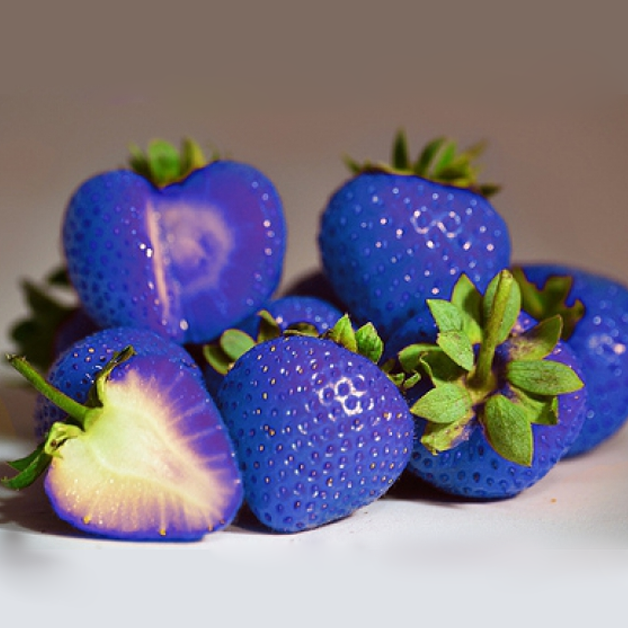 rare magical blue strawberry seeds jack seeds
