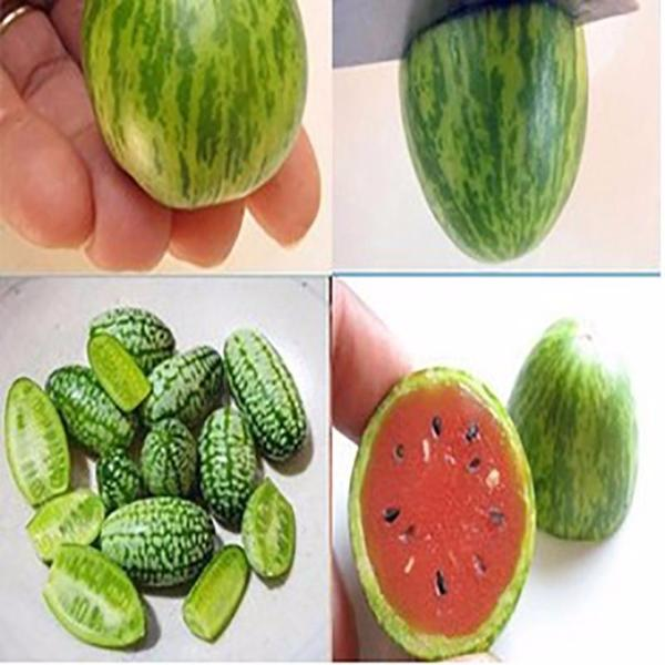 Mini Watermelon Seeds Jack Seeds